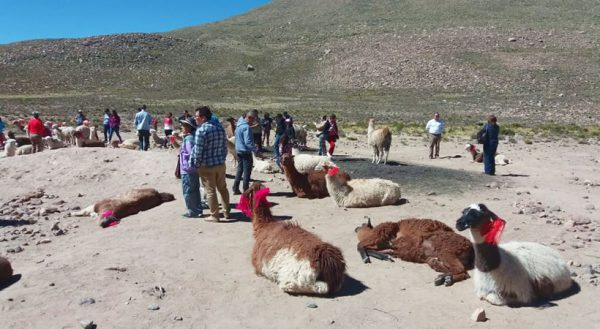 Arequipa – Colca canyon – Puno (Full day) / Shared service