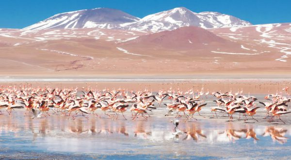 Sun island – Salt flat of Uyuni (5d/4n) / Collective service