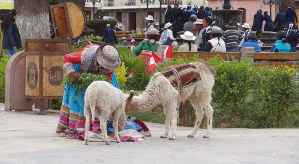 Trekking: Puno – Colca canyon – Arequipa (3d/2n) / Service in group